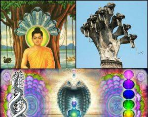 New Age Guru The Great Buddha 7 snakes