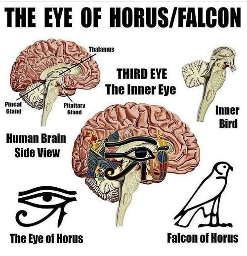 third eye chakra eye of hours falcon