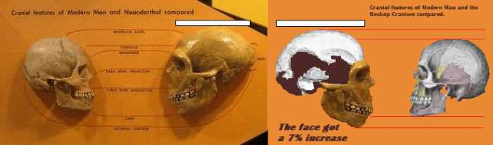 Ancient giants cleveland neanderthal
