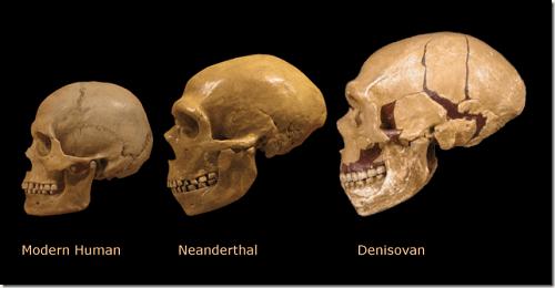 ancient giants neanderthal denisovan modern human