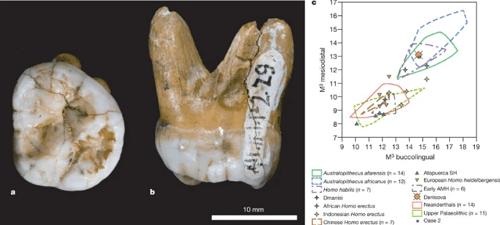 ancient giants denisovan 4 tooth