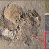 5.7 Million Year Old Ancient Human Footprint 38