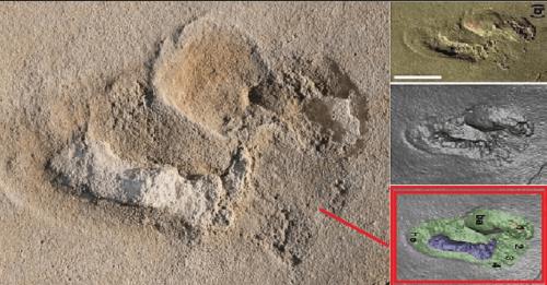 5.7 Million Year Old Ancient Human Footprint 18